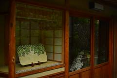 DSC_0020 (sxcxxhx) Tags: japan osaka kyoto hydrangea flower trip voyage 日本 大阪 京都 旅行