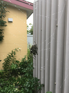 Nervous Spider, Nervous Photographer