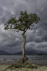 Millarochy Tree 02 (barry.young10) Tags: cloud weather tree lanscape landscape photography canon water loch lomond scotland