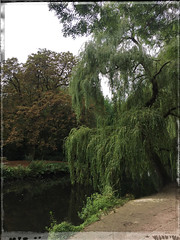 the small park (j.p.yef) Tags: peterfey jpyef yef park trees water pond teich germany hamburg