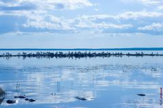 Birds (alexey & kuzma) Tags: nature naturaleza landscape paisaje russia rusia karelia samsung gx20 pentax k20d