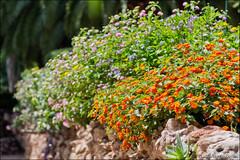 jardines de alfabia (heavenuphere) Tags: jardinesdealfabia jardinsdalfabia alfabia buñola bunyola mallorca majorca balearicislands islasbaleares spain espana island europe botanical garden 24105mm