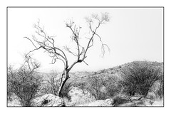 Dry Landscape (Daniela 59) Tags: 7dwf saturdaythemelandscapes daanviljoengamepark winter dry khomashighlands namibia blackandwhite landscapeinblackandwhite danielaruppel