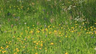 Florcitas silvestres