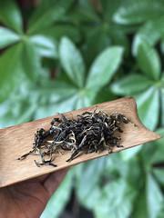 BOKURYO 2018 Black Tea LaoBanZhang GuShu HongCha (John@Kingtea) Tags: bokuryo 2018 black tea laobanzhang gushu hongcha