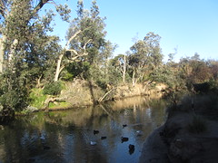 Kananook Creek, Seaford (d.kevan) Tags: seaford victoria melbourne streams creeks trees plants ducks animals birds aquaticplants riverbanks reflections