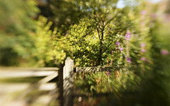 A gate and a fence (Elisafox22) Tags: elisafox22 sony nex6 lensbaby composerpro 50mm optic sweet50 hff fencefriday sunshine shadows gate fence wood wooden trees leaves grasses flowers fyvie fyviecastle aberdeenshire scotland elisaliddell©2018