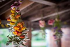From the Rafters (jayneboo) Tags: park national trust flowers drying hanging rafters gardens gardening leica cl