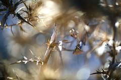 ... Camuflada liosa y así, protegida  !!! (Device66.) Tags: contraste mantis xicon empiezlatemporada verde secarral mispaseos descubre investiga