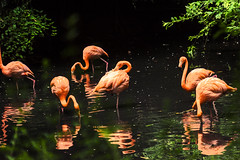RIFLESSI    ----    REFLEXES (Ezio Donati is ) Tags: uccelli birds acqua water alberi trees natura nature italia psrcodelticino provinciadipavia riflessi