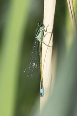 """demselfly • <a style=""""font-size:0.8em;"""" href=""""http://www.flickr.com/photos/157241634@N04/41155292420/"""" target=""""_blank"""">View on Flickr</a>"""