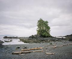 Port Renfrew (@davidflem) Tags: vancouverisland britishcolumbia canada mamiya7 50mm kodak portra400 120film 6x7 mediumformat filmphotography istillshootfilm