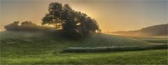 Sunrise (Robbi Metz) Tags: deutschland germany bayern bavaria reischenau augsburgwestlichewälder landscape trees forest fields sunrise colors canoneos