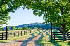 Rappahanock Farm (creepingvinesimages) Tags: hff friday fence trees shdows fields farm blue sky rappahanockcounty virginia outdoors rural nikon d7000 pse topaz