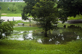 Partly flooded dog park at Trinity-Bellwoods