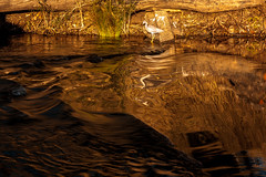 ..melted honey.. (dawn.tranter) Tags: meltedhoney dawntranter reflections reflected abstract bird sunlight