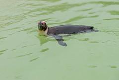 Aquarium du Croisic (franck_barske) Tags: vacances france loireatlantique paysdelaloire aquarium séjour manchot voyages concepts lecroisic