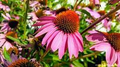 Flowers For You (Maarten Kleijkamp) Tags: bloemen flowers