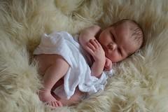 2018-08-06_06-25-30 (tiffanycsteinke) Tags: sophie newborn newbornphotography infant babygirl baby