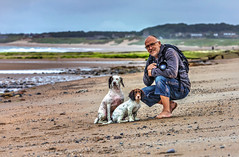Beach Boys (Missy Jussy) Tags: northumberland northeastcoast northsea coast coastline england greatbritian landscape land homes rocks sand beach sea seaside britishsummertime trevorkerr razzle rupert man outdoor outside dogs dogwalk portrait pets animals englishspringer springerspaniel spaniel mansbestfriend malespringerspaniel 70200mm ef70200mmf4lusm ef70200mm canon70200mm 5d canon5dmarkll canon5d canoneos5dmarkii canon