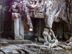 Angkor, Preah Khan Temple Tree 20180203_134134 DSCN2740 (CanadaGood) Tags: asia seasia asean cambodia siemreap angkor buddhist hindu khmer preahkhan temple tree building architecture archaeology canadagood 2018 thisdecade color colour