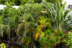 At Miami(near south beach) (ppaulvadivu) Tags: paulvadivu chennai miami south beach seascape greenery 2017