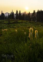 Sunset in the Mountains. (Mt Rainier NP, Paradise). (Sveta Imnadze) Tags: haze mtrainiernp wa hiking paradise wildflowers beargrass sunset nature