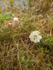 DSCN5737 (norwin_galdiar) Tags: bretagne brittany breizh finistere monts darrée nature landscape paysage