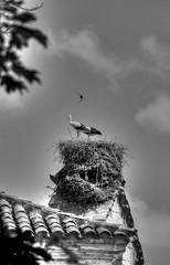 SEGOVIA (toyaguerrero) Tags: segovia spain castilla castille castillayleón architecture arquitectura cigüeñas storks