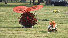 Visita al Papá_JCV4850 (DelRoble_Caleu) Tags: parque del recuerdo cementerio región metropolitana delroblecaleu julio carrasco valenzuela