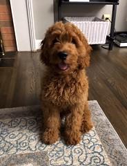 Ginger's handsome Finn!
