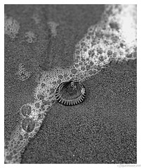 Where is Venus? (wimmerstefan) Tags: bw nikond7100 northsea sigma1835mmf18 clam coast nature sea seamussel shell tide waves