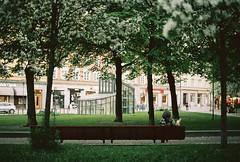 Camouflage. No edit, analog. 35 mm (backmango) Tags: stockholm parkbench 35mm filmisnotdead film nikonf70 nikon analogue analog photooftheday picoftheday bestoftheday portrait visitsweden sweden camouflage flickr pro flickrpro tree