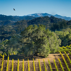 Balverne (notrevue) Tags: jnbphotography balverne wines notre vue estate winery vineyards sonoma county wine
