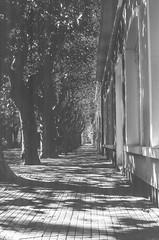 15710026-2-Editar (Buenos Aires loucoporanalogicas) Tags: canon eos3 agfa copex rapid 100 colônia montevideo uruguay 2015