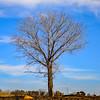 Still winter over here (In Explore) (Johann (Sasolburg, RSA.)) Tags: tree deadtree treemendoustuesday square squareformat johanndejager ef24105mmf4lisiiusm canoneos5dmarkiv explored inexplore