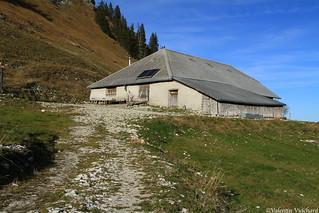 SF_IMG_8547 - Bremingard, alpine pasture farm, Gruyère region - Switzerland