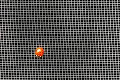 Ladybug In Ashes (amarilloladi) Tags: cof cof035 mesh macromondays macro insect ladybug screen fauna minimal minimalist red grid cof035mark cof035uki cof035ally