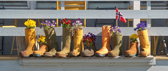 Parade (krieger_horst) Tags: gummistiefel gelb norwegen hurtigruten honningsvåg weis blumen