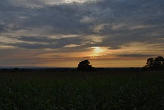 Redhill sunset 060818 - DSC_0902 (Leslie Platt) Tags: exposureadjusted straightened cropped redhillsunset tarporley cheshirewestchester