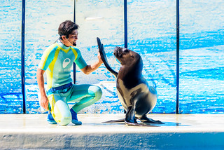 Touch!! At the Dolphins and Sea Lions Show of Enoshima Aquarium, Fujisawa : イルカとアシカのショー(新江ノ島水族館)