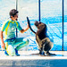 Touch!! At the Dolphins and Sea Lions Show of Enoshima Aquarium, Fujisawa : イルカとアシカのショー(新江ノ島水族館)