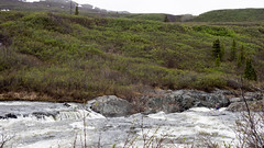 Tangle Lakes-13 (qwertyomen) Tags: tangle lakes delta river stream mountains mountain flowers tundra alaskarange alaska