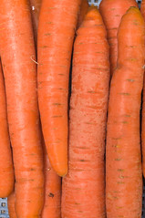Organic carrot. Food background. (svetoslavradkov) Tags: carrot fresh orange food healthy organic ripe vegetable background closeup diet ingredient isolated nobody raw root vegetarian whole many group macro harvest agriculture bunch green leaf nutrition plant farm growing soil plantation field gloves red autumn ground agrarian bed close country crop cultivation ecological female gardening grow growth hand land