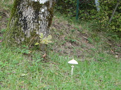 DSCN9590 (Gianluigi Roda / Photographer) Tags: autumn october 2012 apennines autumncolors mushrooms appenninobolognese autunno alberi funghi