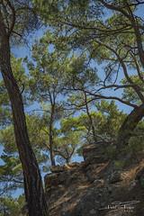 Lesvos rough nature. (PvRFotografie) Tags: greece griekenland lesbos lesvos nature natuur bos bomen boom tree trees forest rocks rotsen landscape landschap sonyilca99m2 minolta minoltaaf35105mmf3545 vintagelens