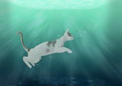 Catfish (Chris Willis 10) Tags: animal underwater mammal fun nature pets cute blue wildlife swimminganimal sea carnivore playful jumping outdoors catfish cat fish bubbles