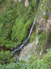 El Cedro-vízesés (ossian71) Tags: spanyolország spain kanáriszigetek canaryislands gomera lagomera garajonay tájkép landscape természet nature vízesés waterfall
