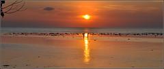 la chasse aux coquillages... (Save planet Earth !) Tags: indonésie lovina sunset plage beach amcc nikon