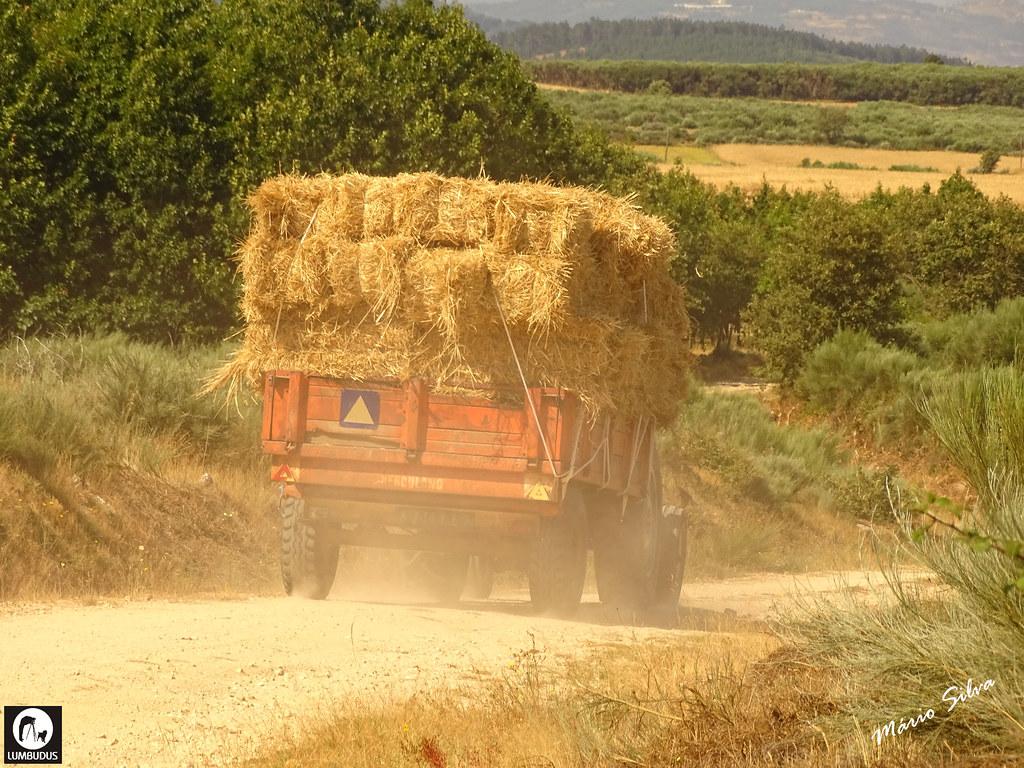 Águas Frias (Chaves) - ... transportando fardos de feno ...